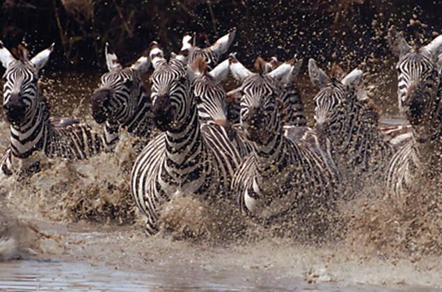Lentes captam vida selvagem na África Subsaariana