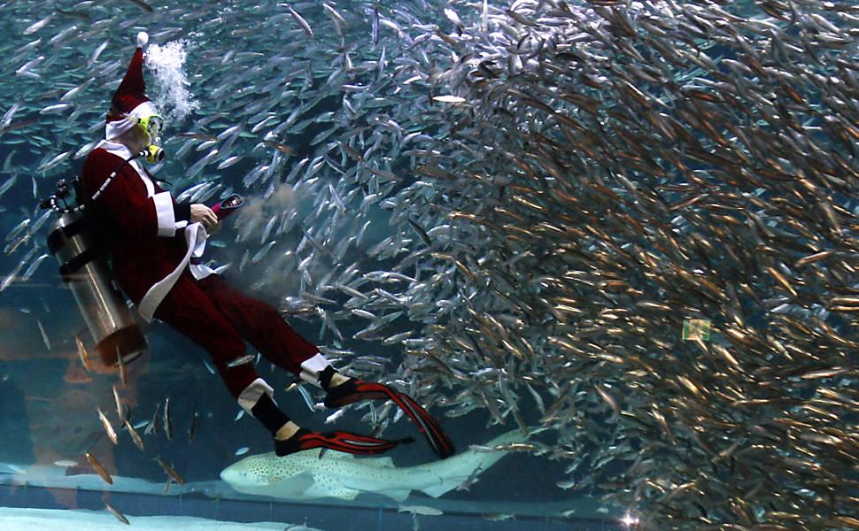 Papai Noel no aquário
