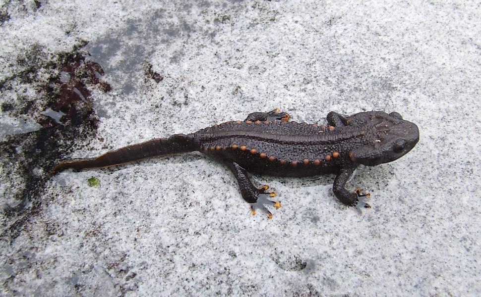 Novas espécies descobertas em Mekong