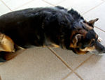 O vira-lata Scooby foi adotado por Thaís Bianchini após o cãozinho acompanhar uma pessoa que levaram para a delegacia do lado da casa dela. Agitado, já sobreviveu a diversos acidentes como um choque e um atropelamento