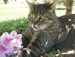 Léo tem oito anos e mora com Sandra Correa em São Roque (SP). ?Ele gosta muito de fazer amizade com cães de pequeno porte, é guloso e como todo gato ama dormir?, diz a dona