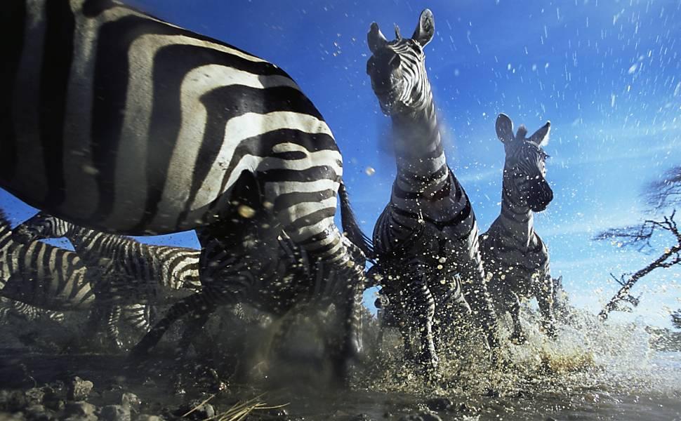 Vida selvagem é retratada em fotos de exposição em Londres