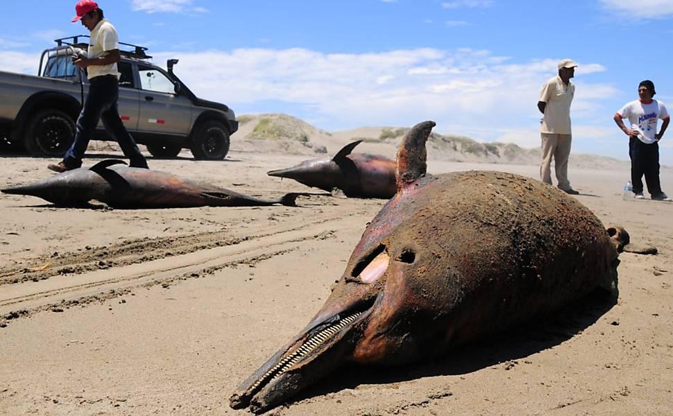 Golfinhos mortos