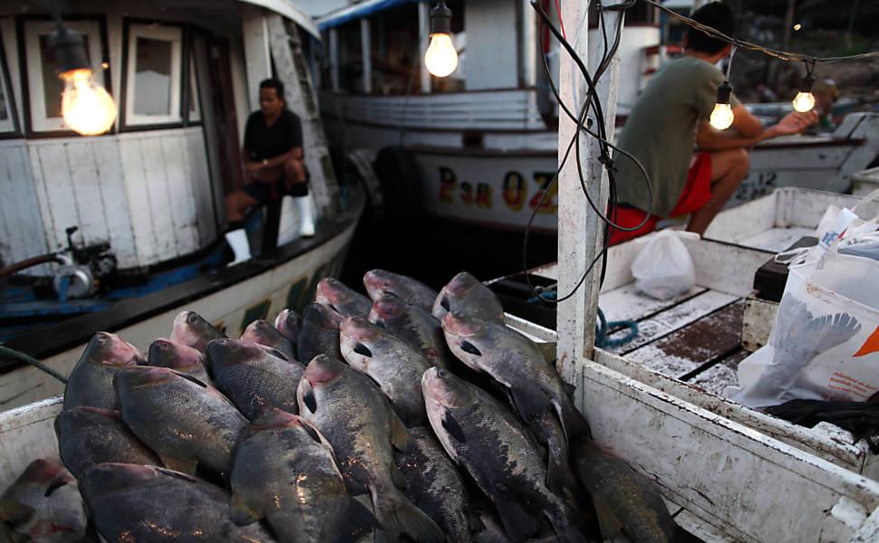 Peixes desperdiçados no porto de Manaus