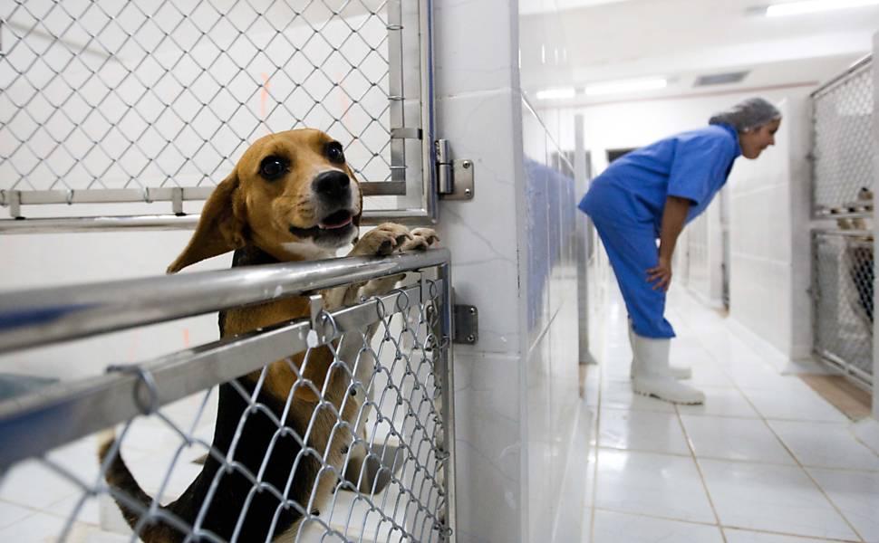 Beagles usados em teste