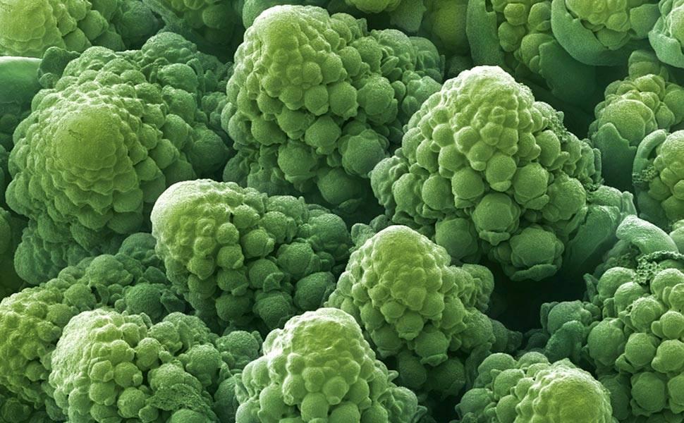 Fotos revelam formas e cores dos alimentos