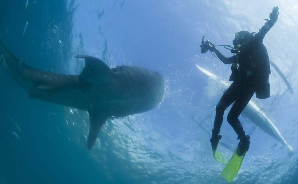 Turismo com tubarões nas Filipinas