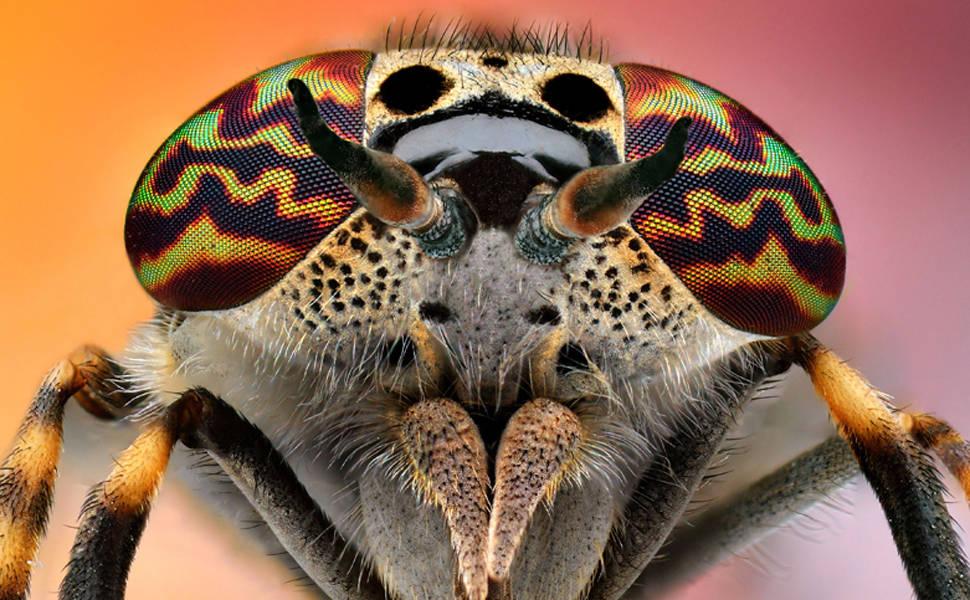 Olhos de insetos