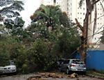 Árvore que caiu sobre seis carros na rua Moliere, na altura do número 200, no Jardim Marajoara, na zona sul de São Paulo