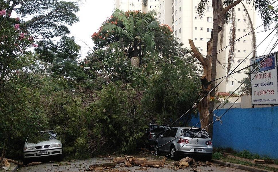 Árvore cai em cima de carros