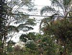 Após a queda da árvore, que ocorreu por volta das 11h desta segunda-feira (1º), a rua na zona sul foi isolada