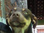 Logan, 4, é um cão sem raça definida  que adora um colo. Apesar de ser carinhoso,  às vezes, ele apronta algumas, como puxar as roupas do varal e entrar em casa escondido, conta sua dona Carol Oliveira de Indaiatuba (SP)