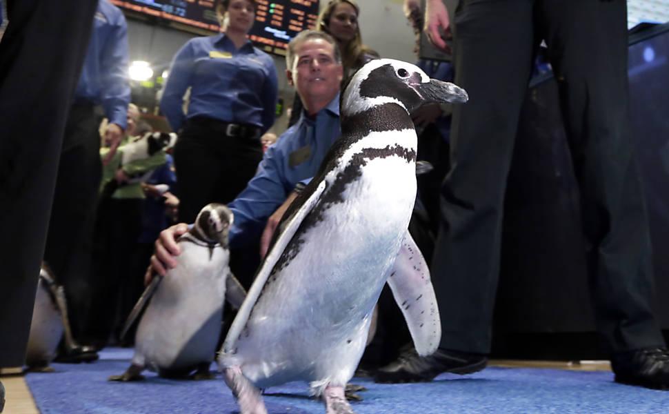 Pinguins na Bolsa