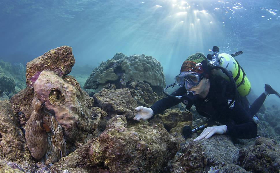 Em busca de criaturas submarinas