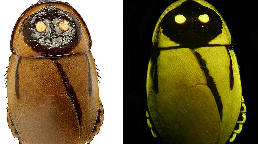 Top 10 de novas espécies