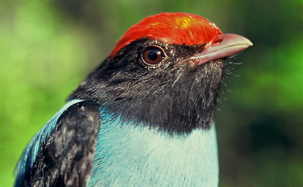 """""""Birdwatching"""""""