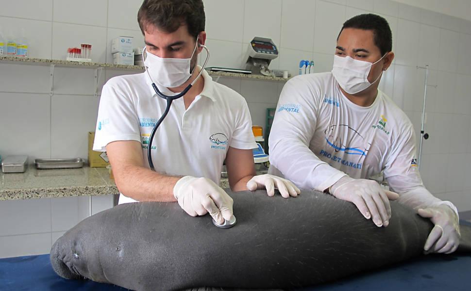 Novo centro de tratamento para peixe-boi