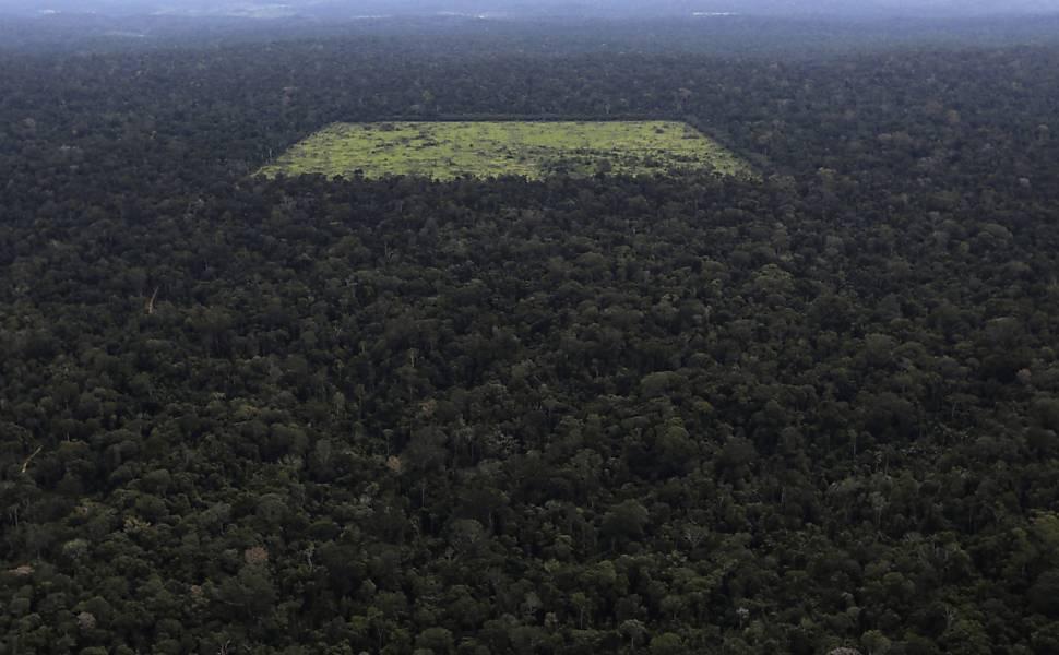 Registros do desmatamento na floresta amaz�nica