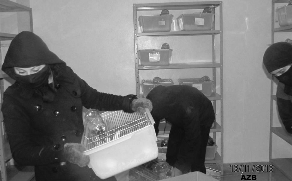 Ativistas resgatam animais em São Roque (SP)