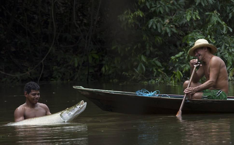Pesca de pirarucus na Amazônia