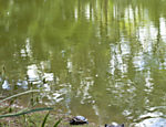 Vista geral do lago do Parque do Piqueri, Tatuapé. Estimativa é que hoje vivam 150 tartarugas no local.