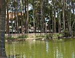 Vista geral do lago do Parque do Piqueri, no Tatuapé. Estimativa é que hoje vivam 150 tartarugas no local.