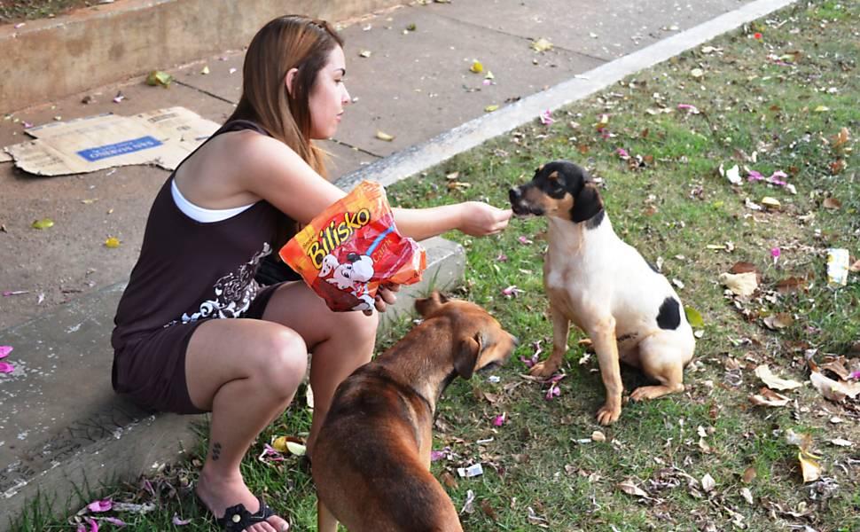 Cães de rua catalogados