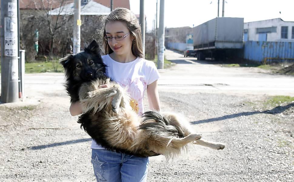 Cães na Romênia