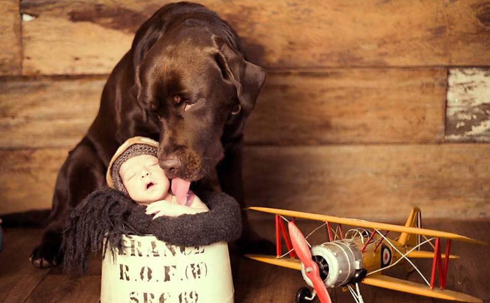 Cães e recém-nascidos