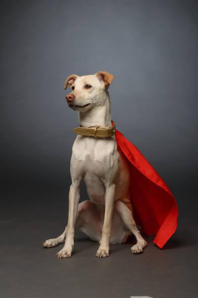 Super cão