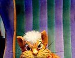 Gato pintado vive na biblioteca e conhece todos os exemplares da coleção