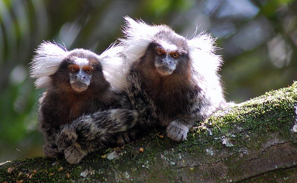 Os 10 'animais' mais fofos de 2014, segundo a 'Nature'