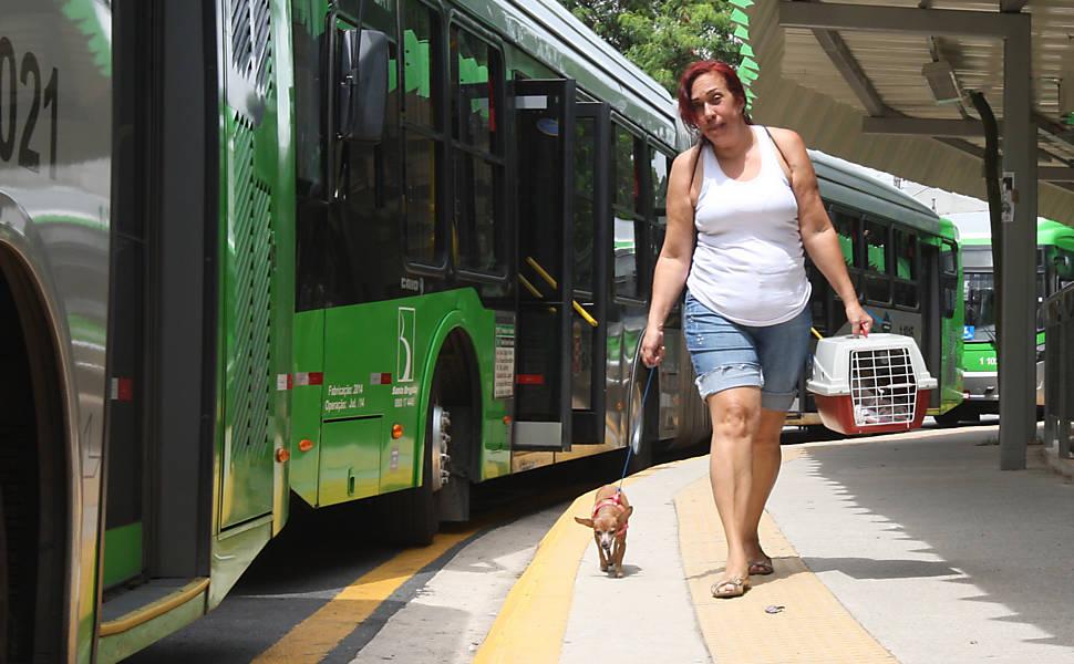 Transporte de animais nos ônibus de SP