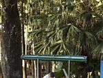 O parque da Água Branca (zona oeste de SP) tem atividades no feriado de Páscoa