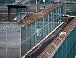 Detento caminha por um pátio da prisão de Guantánamo; foto foi feita em visita monitorada pelos EUA
