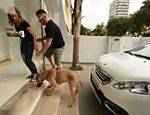 Luisa Mell e Rafael Leal chegam com o cachorro Tyson à clínica veterinária em Pinheiros que vai atendê-lo