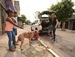 O cachorro Tyson é levado para tratamento, mas com a promessa de retornar para a família