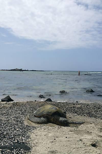 Havaí além do surfe