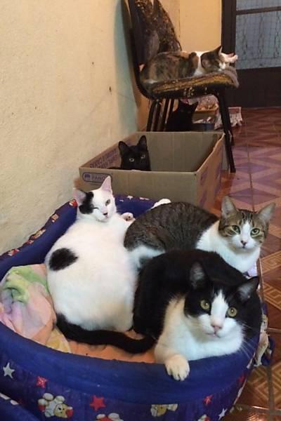 ONG Amantes de Gatos
