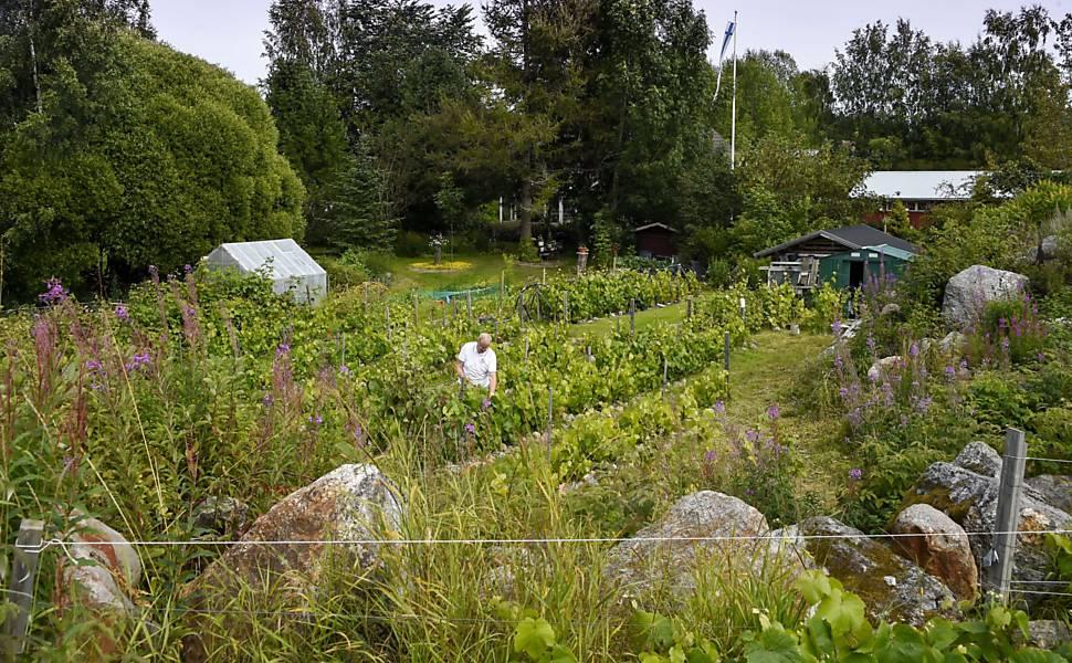 Vinhos da Finlândia