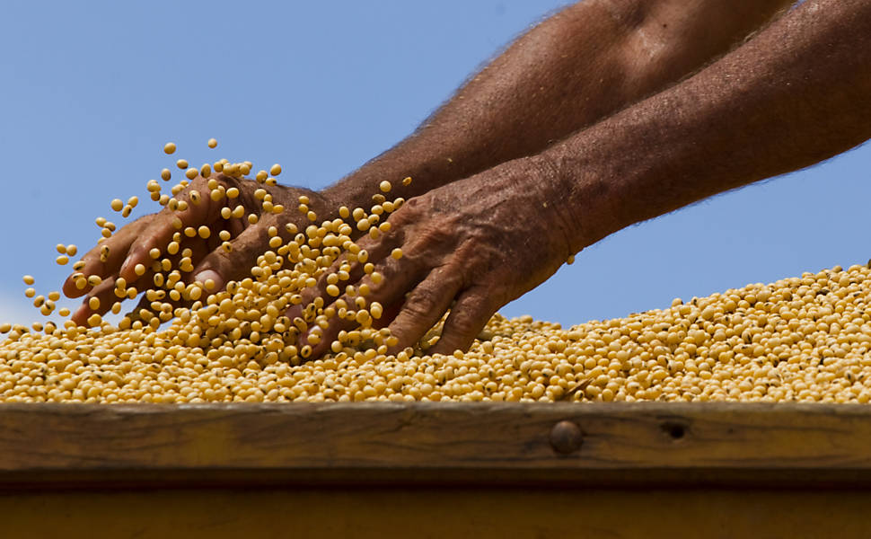 Em Mato Grosso, o valor por hectare chega a valer seis vezes o do sul do Pará, onde a produção de soja e milho avançam