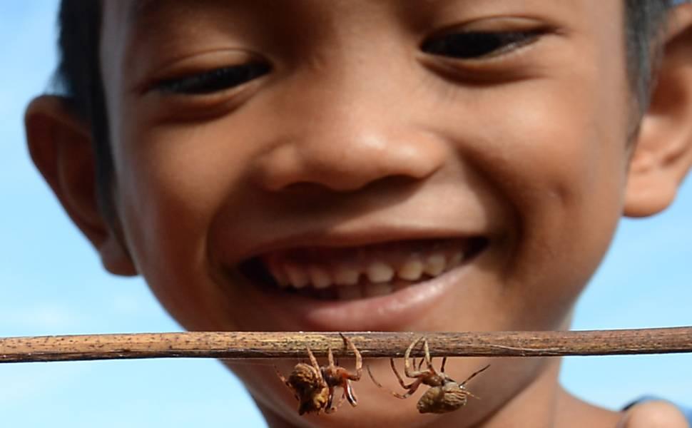 Aranhas lutadoras nas Filipinas