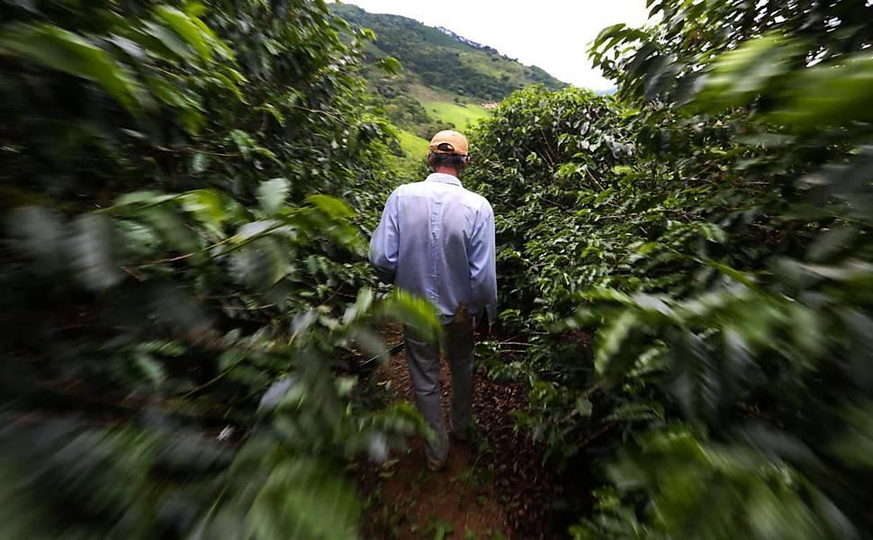 Com dólar alto, produtores de cafés 'gourmet' no interior de SP comemoram exportações