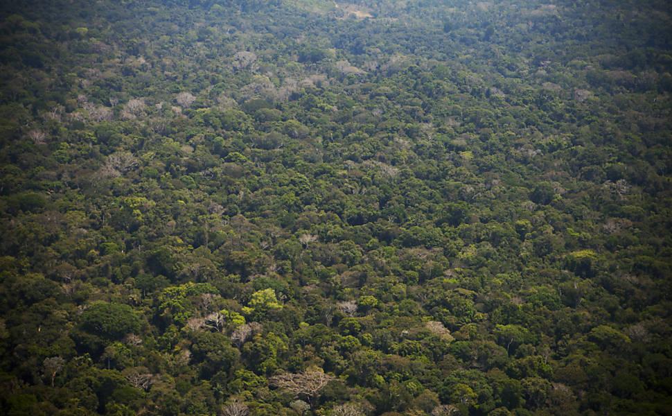 A floresta tropical estava aqui