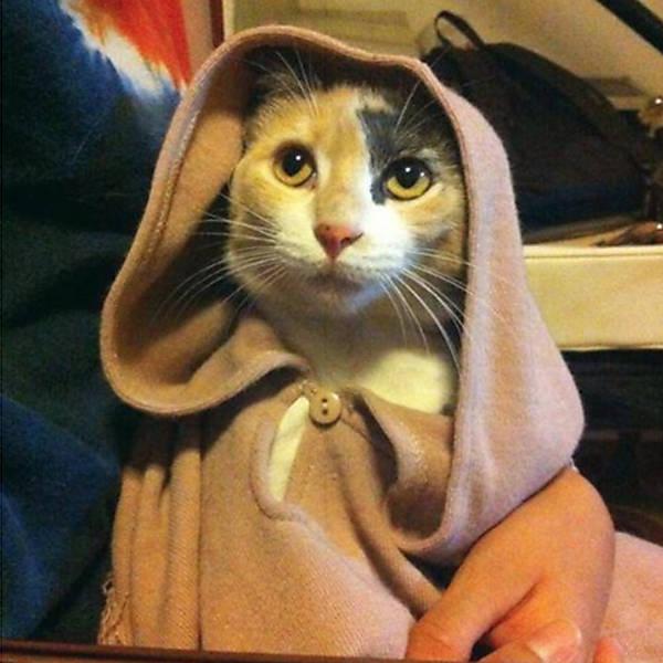 Gatos de Star Wars
