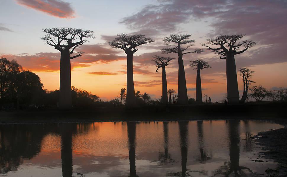 Álbum de Viagem - Madagascar, por Haroldo Castro