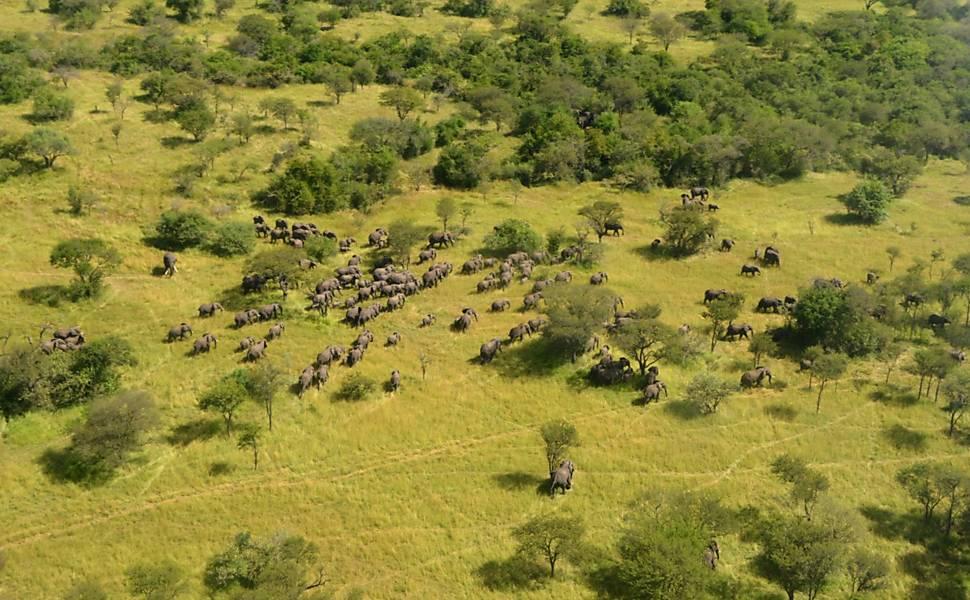 Censo de Elefantes