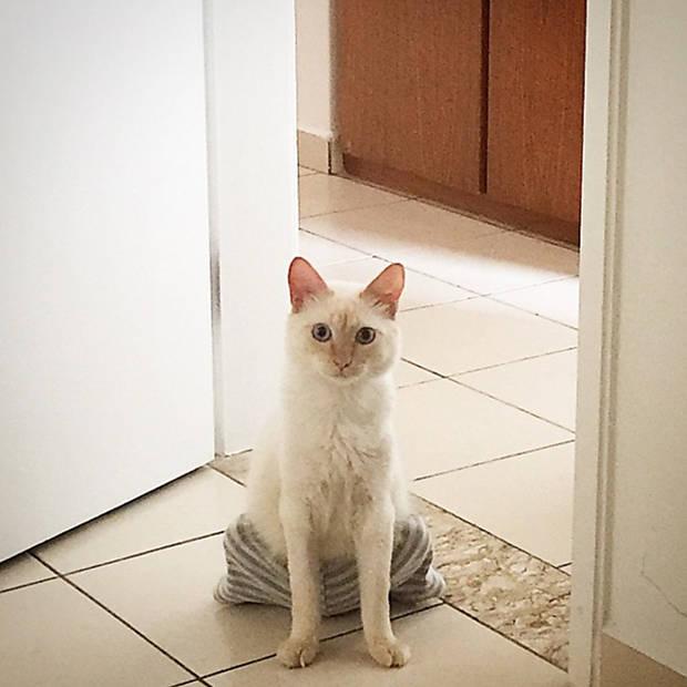 Tom, o gato de bermuda