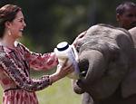 A duquesa de Cambridge, Kate Middleton, alimenta bebê elefante no Centro de Reabilitação da Vida Selvagem (CWRC), na reserva de Panbari, em Kaziranga, na Índia