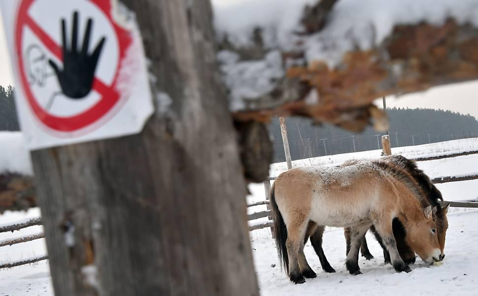 Animais de Chernobil